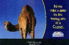 Camel's Rear End: Camel Ad