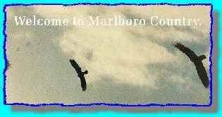 Extract of buzzards ad.